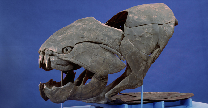 Dunkleosteus terrelli | Cleveland Museum of Natural History