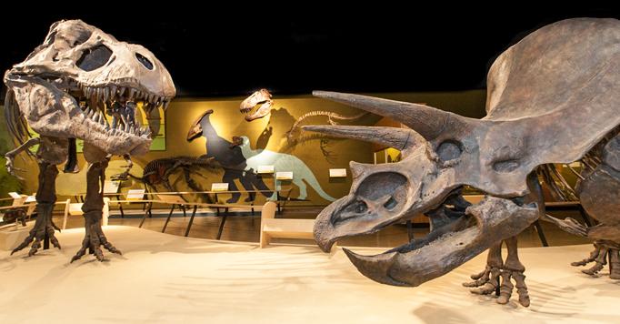 Vertebrate Paleontology Cleveland Museum Of Natural History